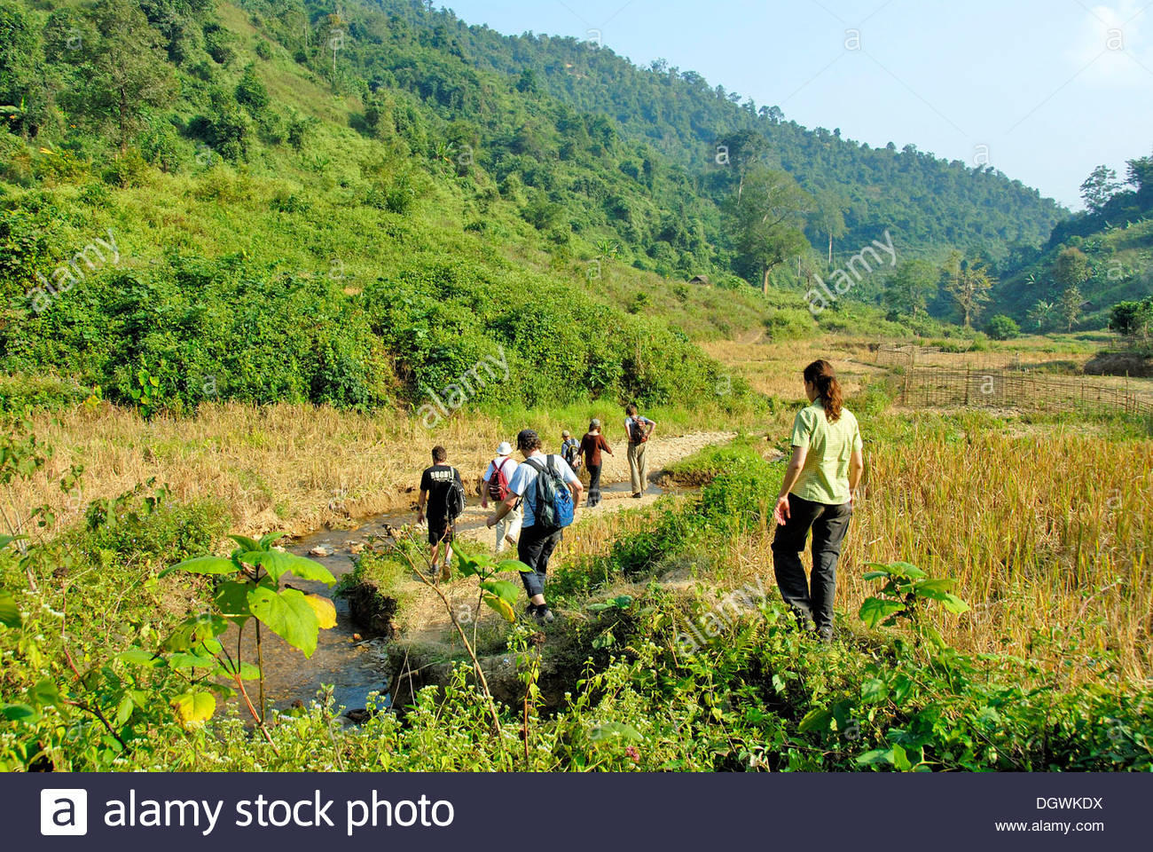 Trekking, hiking in a valley of rice fields in Sanghouey Ban, Muang Khoua district, Phongsali province, Laos, Southeast Asia - Stock Image