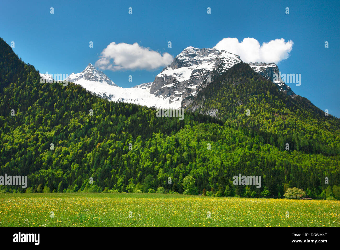 Meadow in front of Mt Reifhorn near Lofer, Lofer, Salzburger Land, Salzburg State, Austria - Stock Image