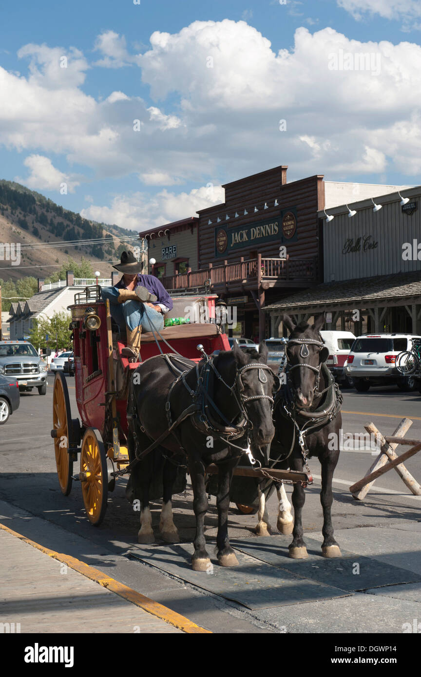 Coachman dressed as a cowboy, historical stagecoach with two horses, Jackson Hole, Wyoming, Western United States - Stock Image