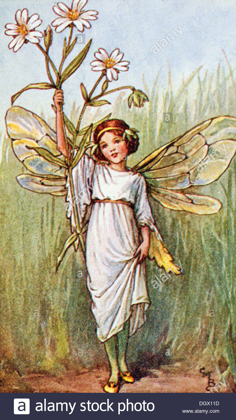 Flower Fairies Illustration by Cicely Mary Barker - The Stitchwort Fairy, 1923 - Stock Image