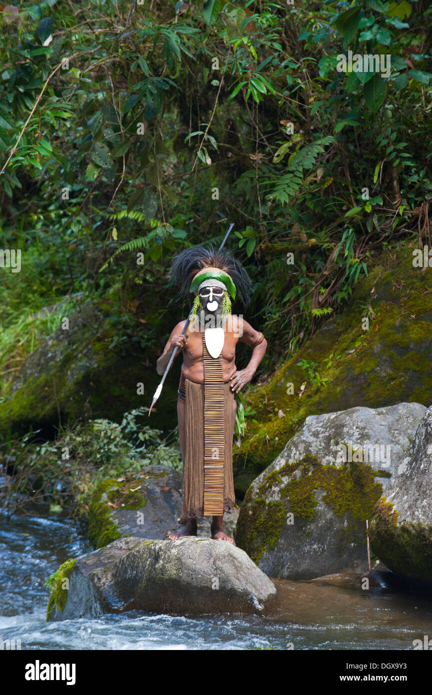 Decorated and painted tribal chief in the Highlands, Paya, Highland, Papua New Guinea - Stock Image