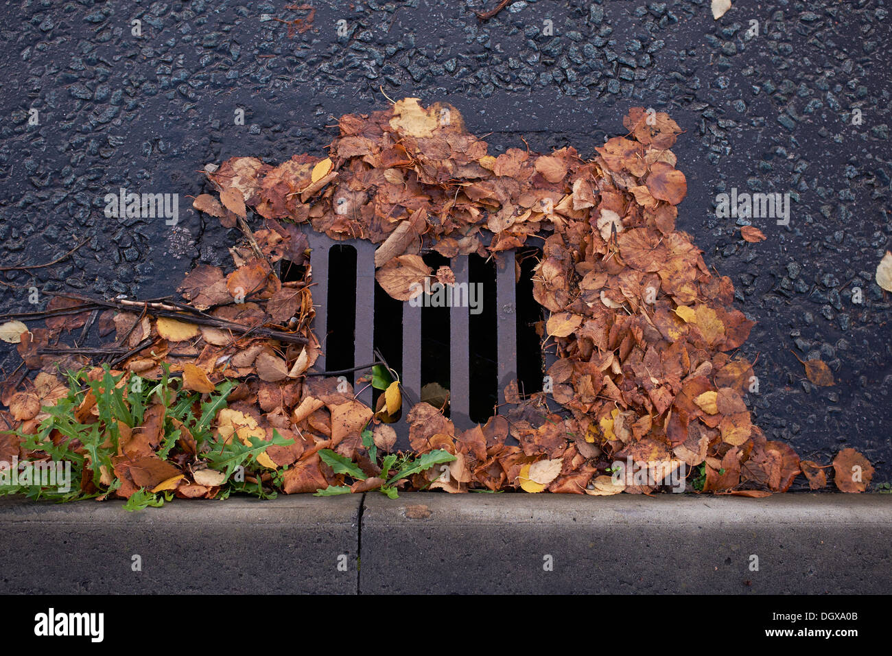 Roadside drain covered in autumn leaves - Stock Image