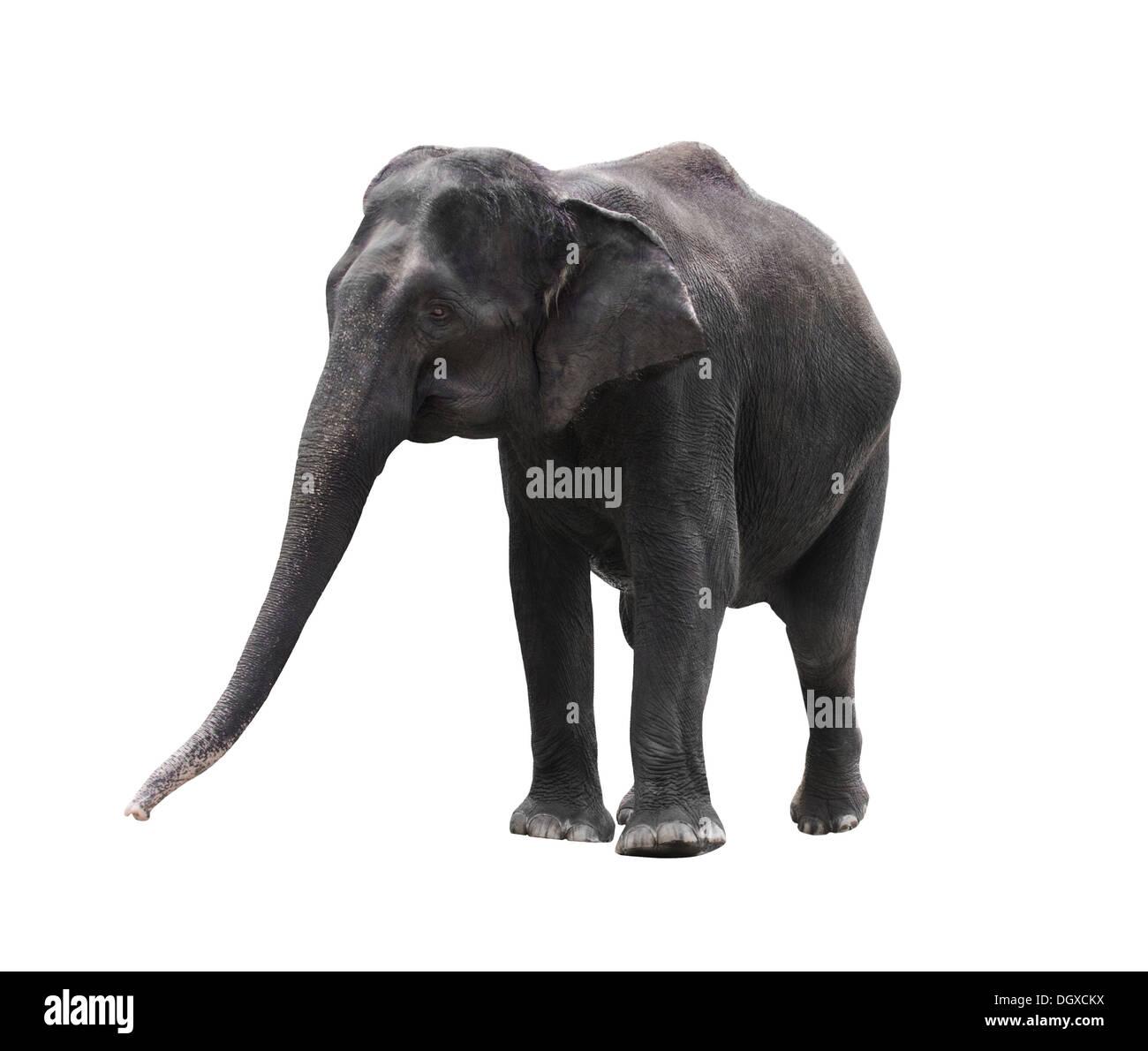 Elephant Isolated Earth Stock Photos & Elephant Isolated Earth Stock ...