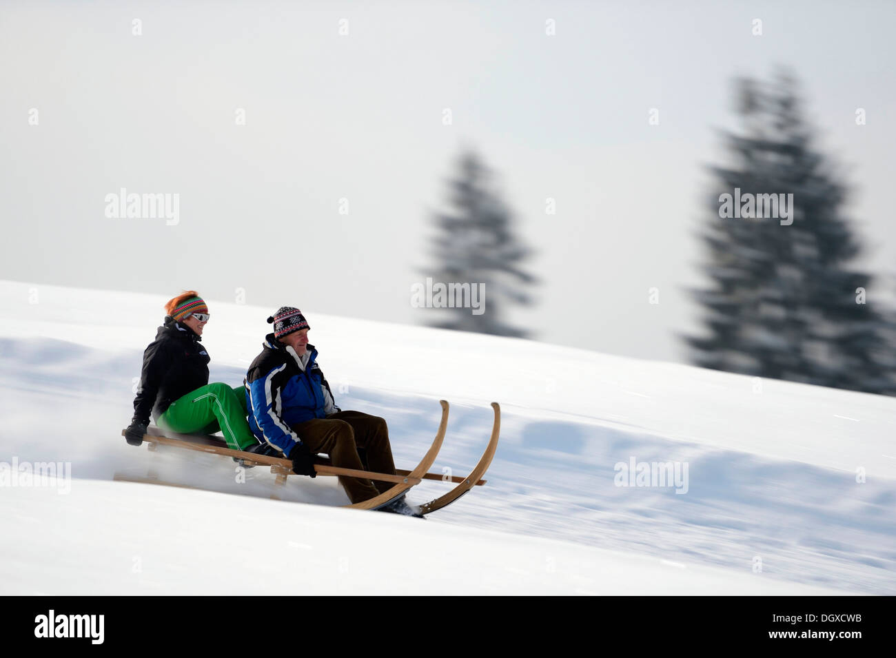 Horn sledge at full speed, Gunzesried, Oberallgäu, Bavaria, Germany - Stock Image