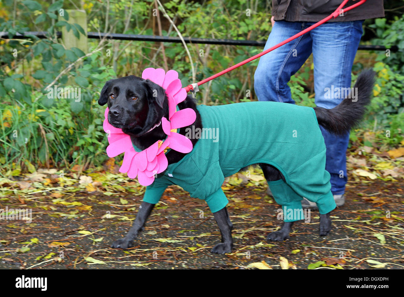 Dog In Fancy Dress Stock Photos & Dog In Fancy Dress Stock Images ...