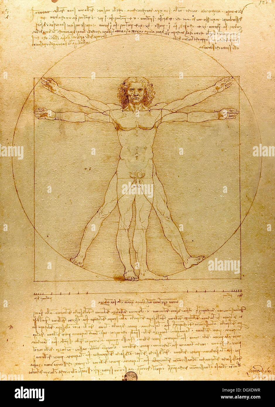 The Vitruvian Man - by Leonardo da Vinci, 1490 - Stock Image