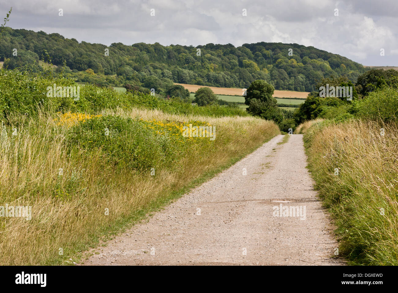 Quiet country lane with hedges and verges, on chalk; south side of Salisbury Plain, Shipton Bellinger, Hants. - Stock Image