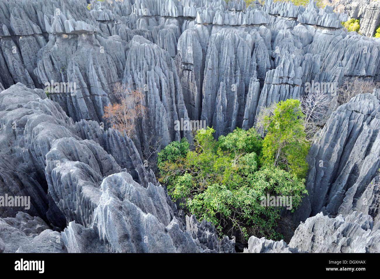 Tsingy Unesco World Heritage Site Karst Landscape With