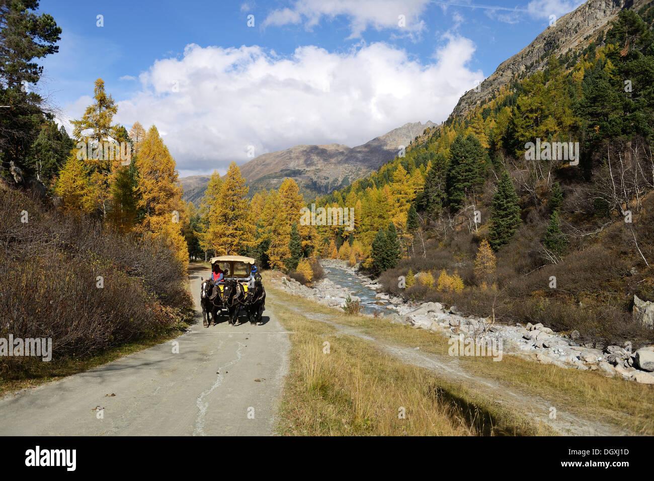 Horse-drawn carriage, Roseg valley, landscape in autumn, Pontresina, canton of Grisons, Engadin, Switzerland, Europe - Stock Image