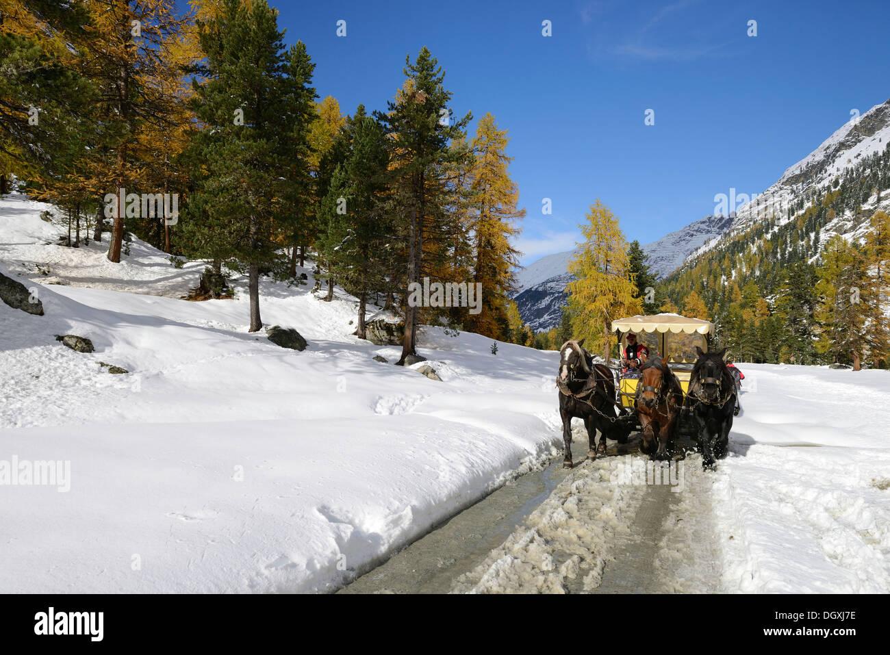 Horse-drawn carriage, Roseg valley, autumnal landscape, Pontresina, canton of Grisons, Engadin, Switzerland, Europe - Stock Image