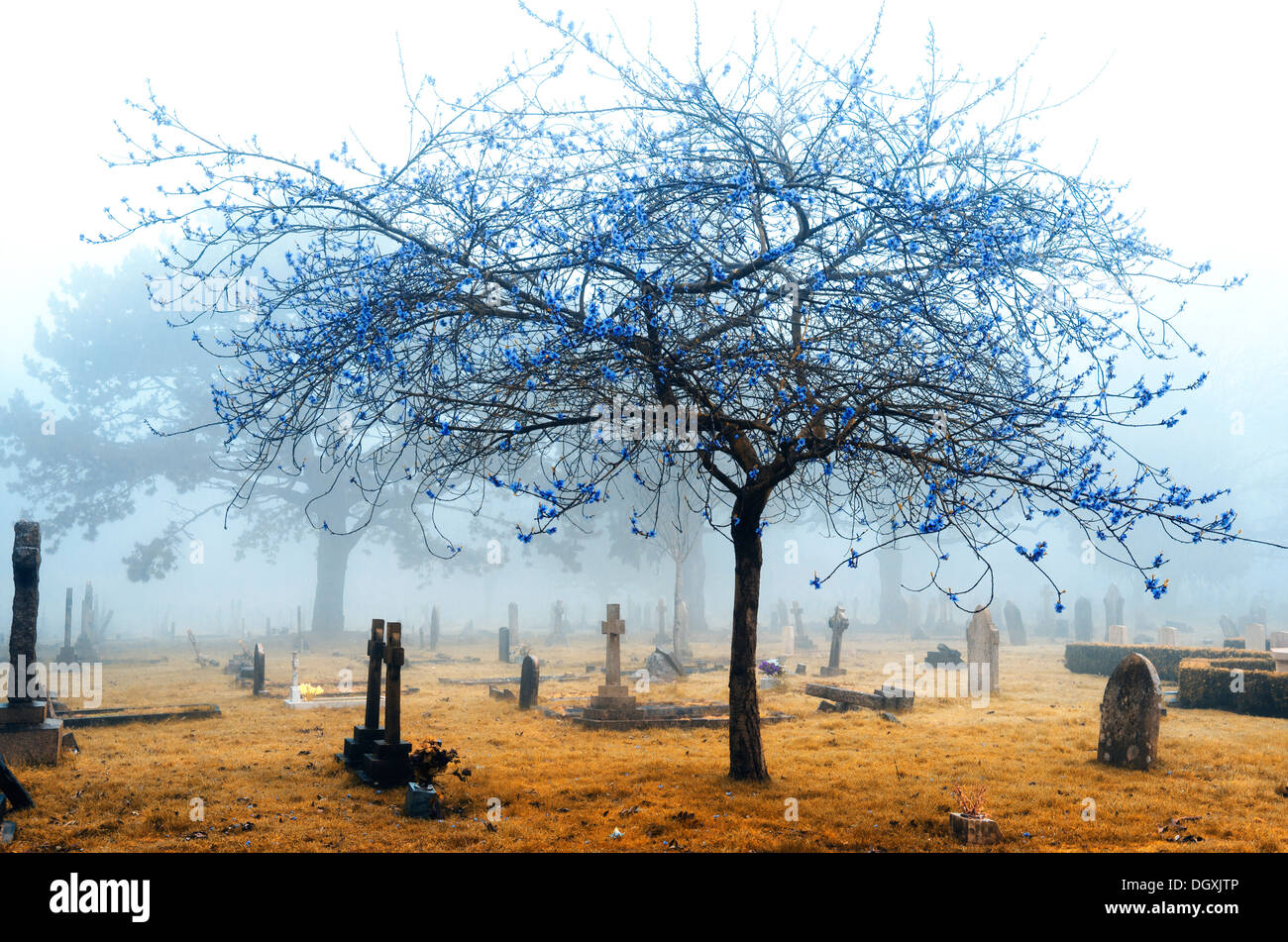 A foggy cemetery in infrared - Stock Image