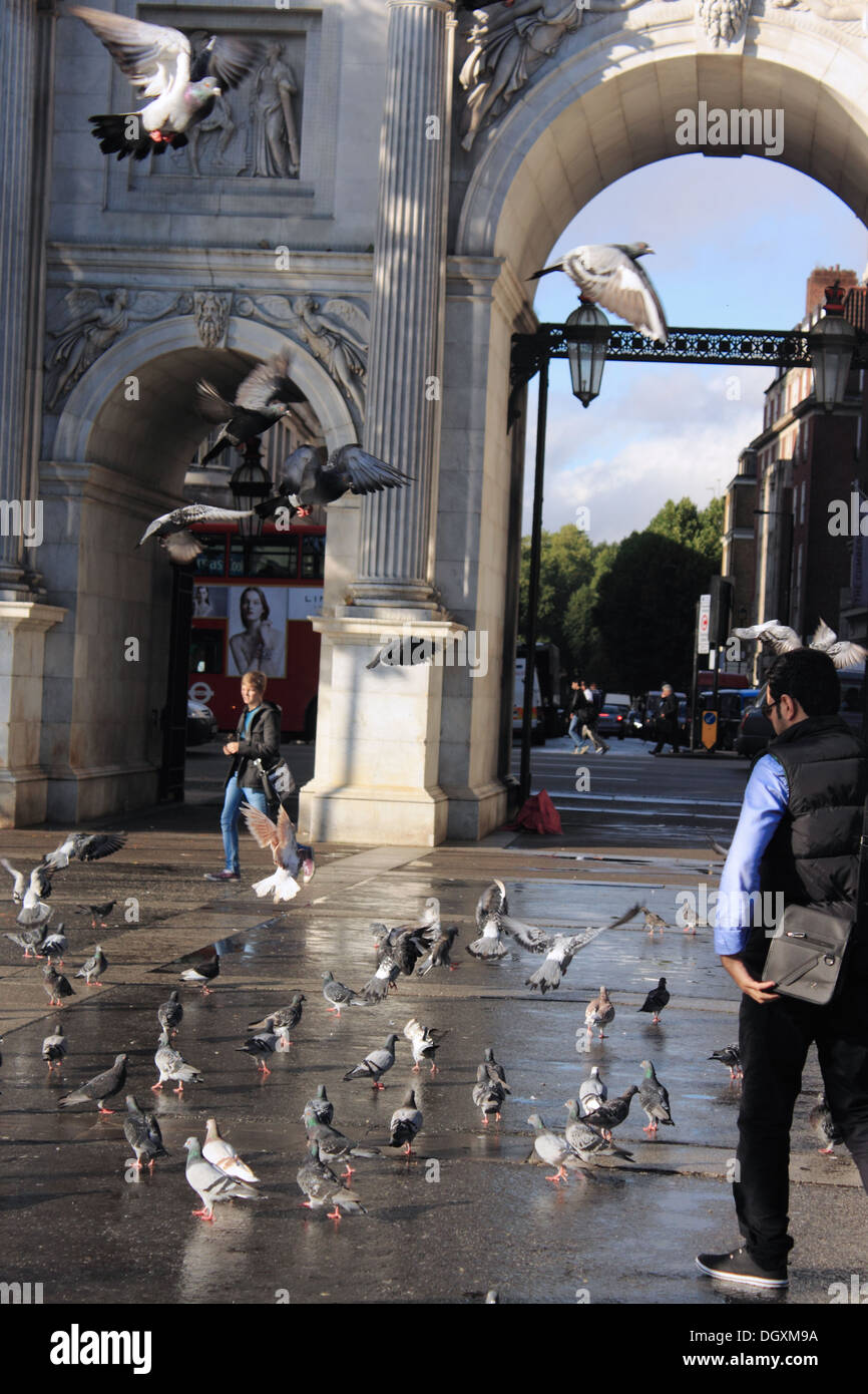Lots of pigeons outside Marble Arch Station in London - Stock Image
