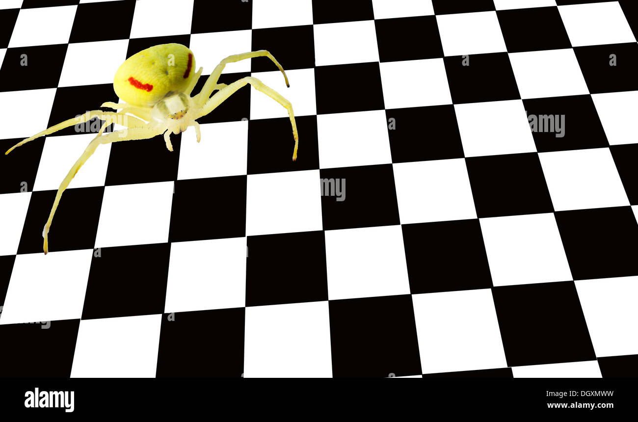 Yellow spider on a chessboard or chequerboard - Stock Image
