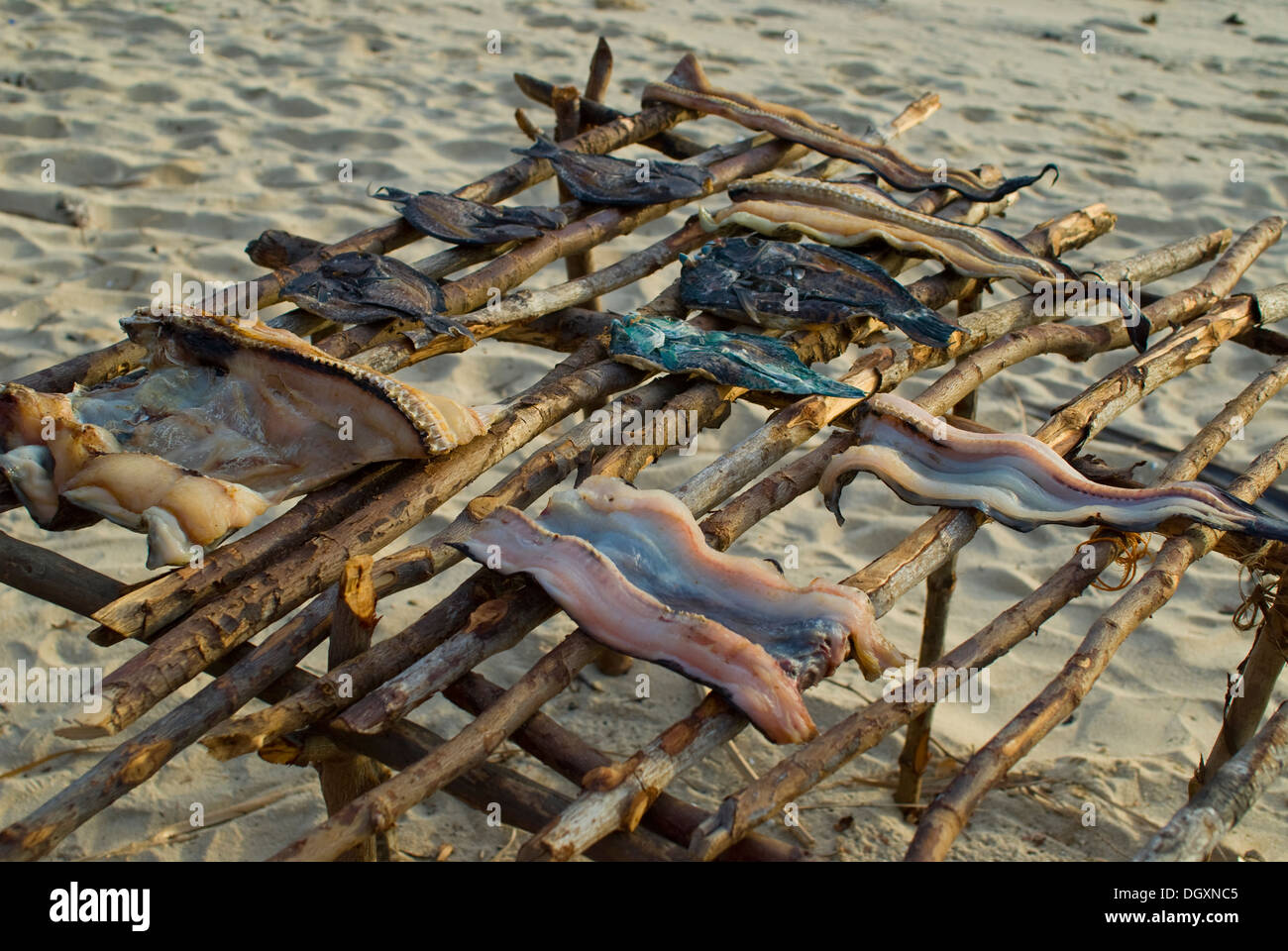 Catch of the day, cleaned and drying on the beach - Stock Image
