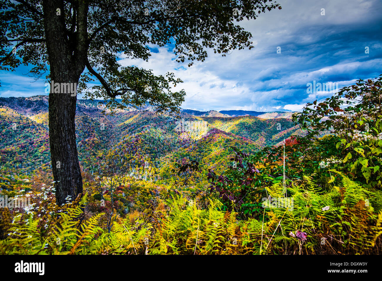 Autumn in the Smoky Mountains National Park. - Stock Image