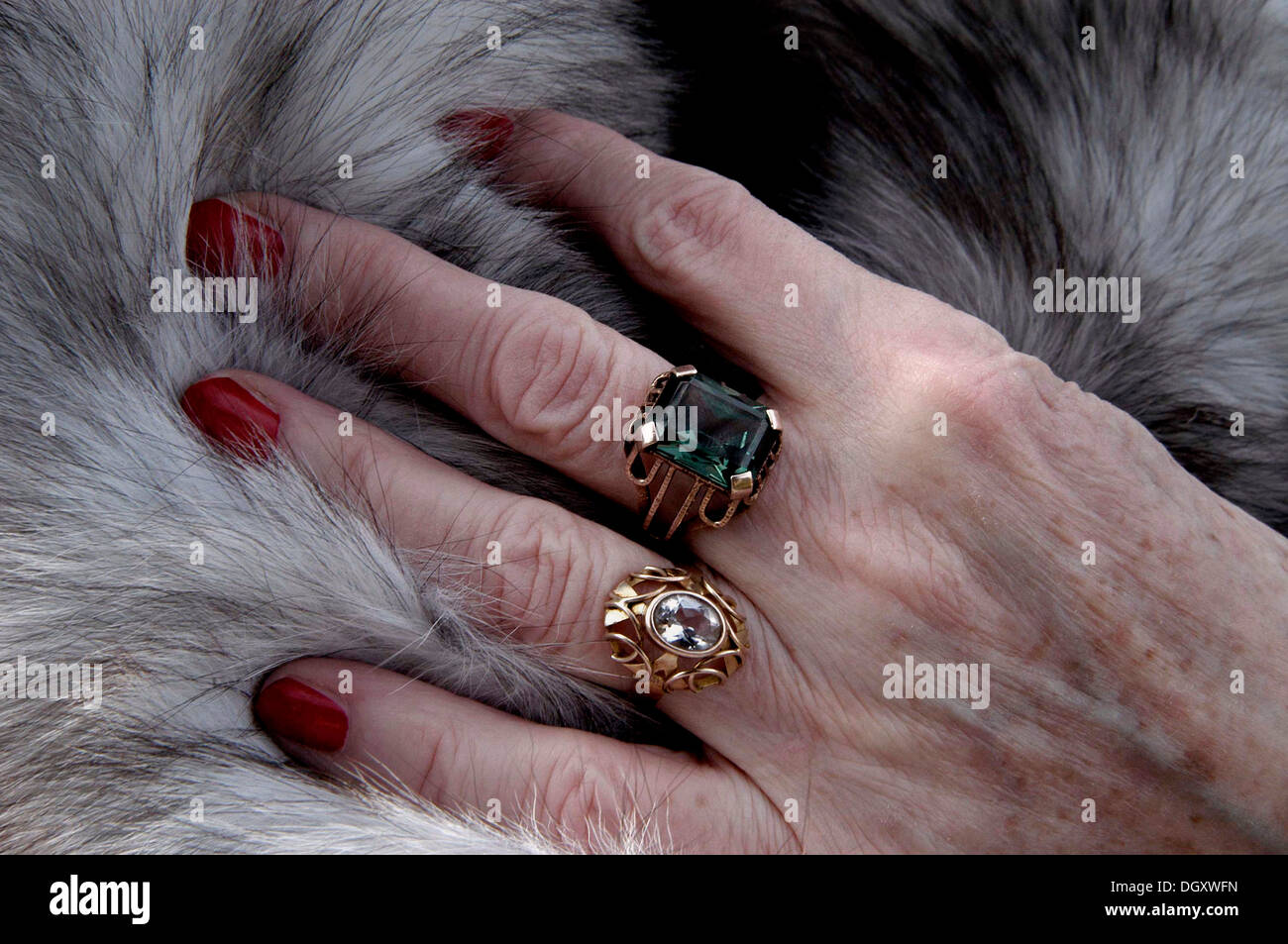 Hand of an old woman with red painted nails and rings lying on a fur ...