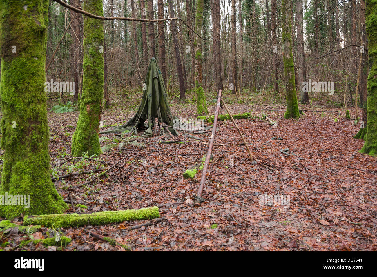 old ragged canvas tent left in woods - Stock Image