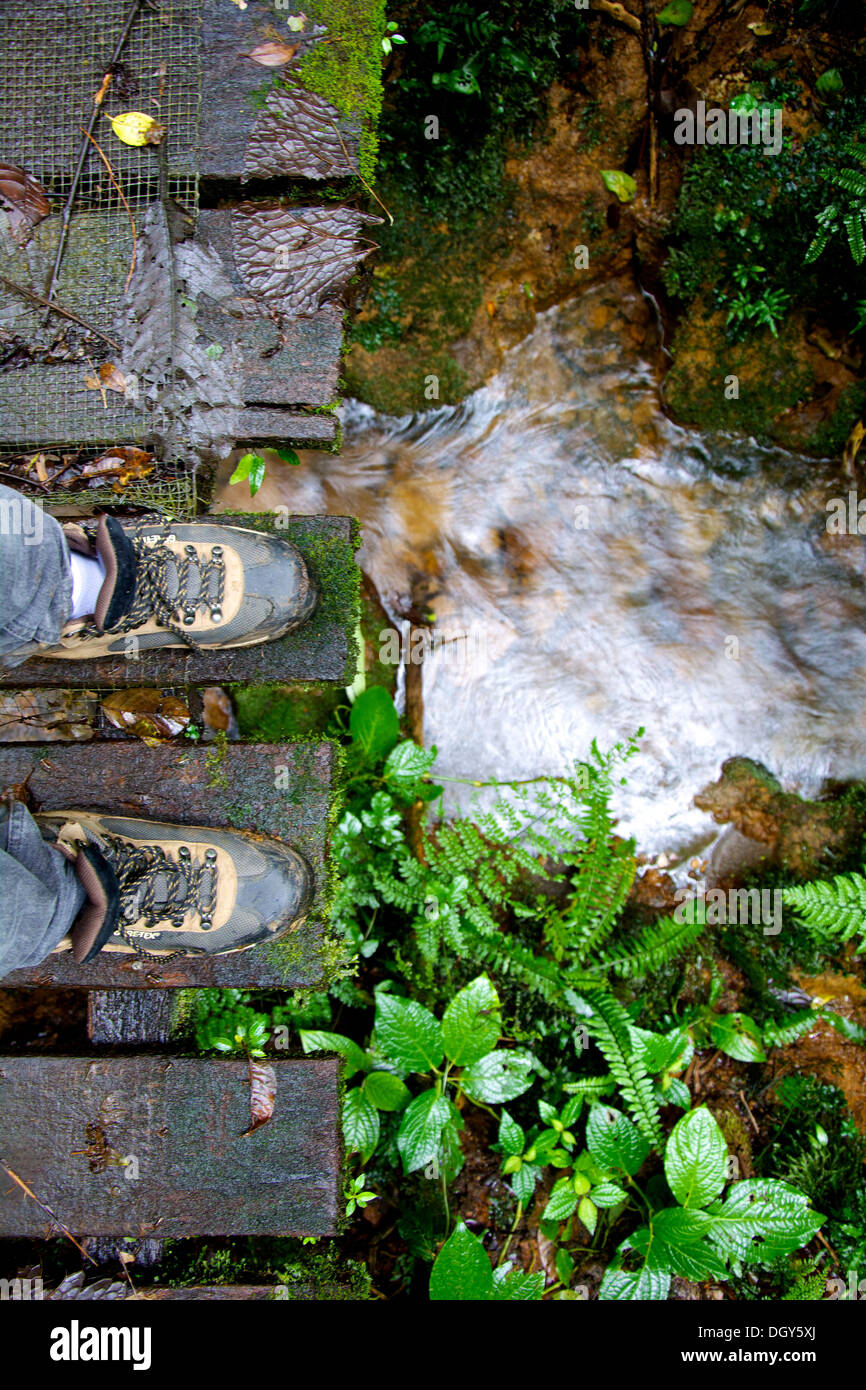 Overview perspective of a man's shoes standing on a wooden bridge looking at a creek at the Santa Elena Biological Stock Photo