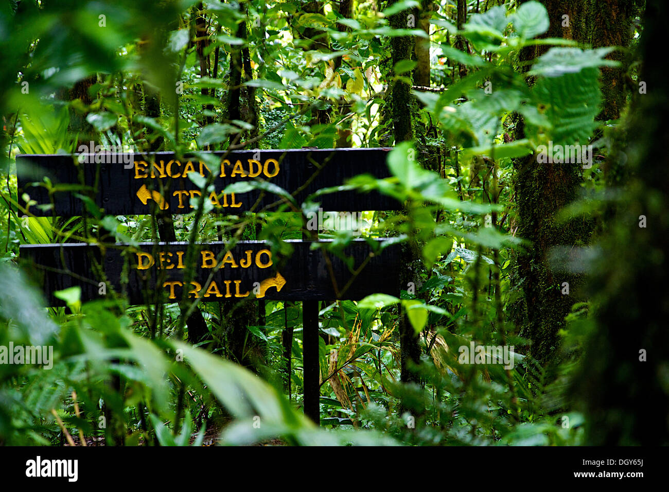 Two signs at an intersection on one of the trails at the Santa Elena Biological Reserve Stock Photo
