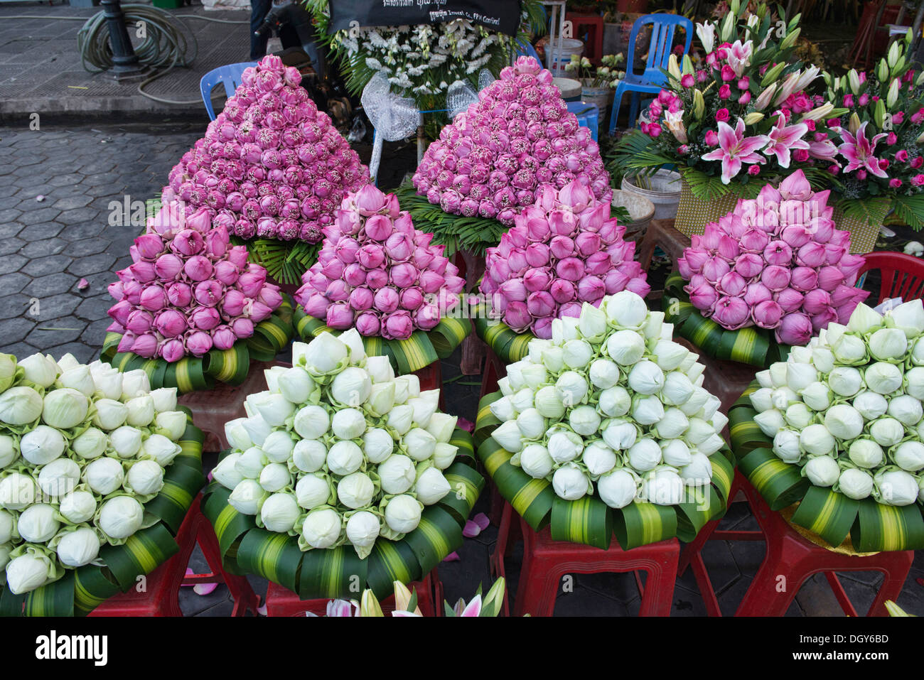 Lotus Flowers For Sale Stock Photos Lotus Flowers For Sale Stock