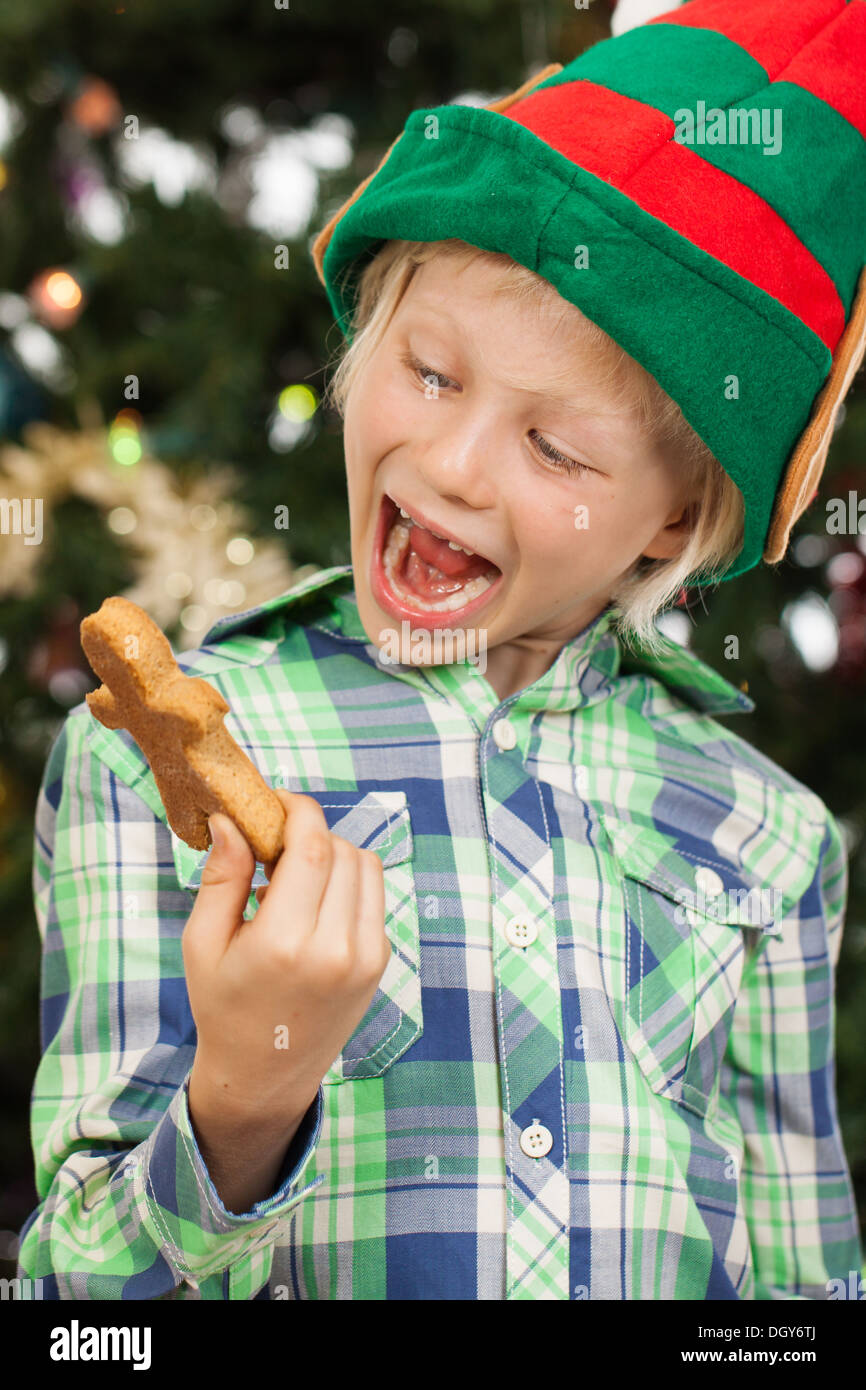 A happy laughing boy dressed as Santas helper or an elf is holding and looking at a gingerbread man cookie. Isolated on white. - Stock Image