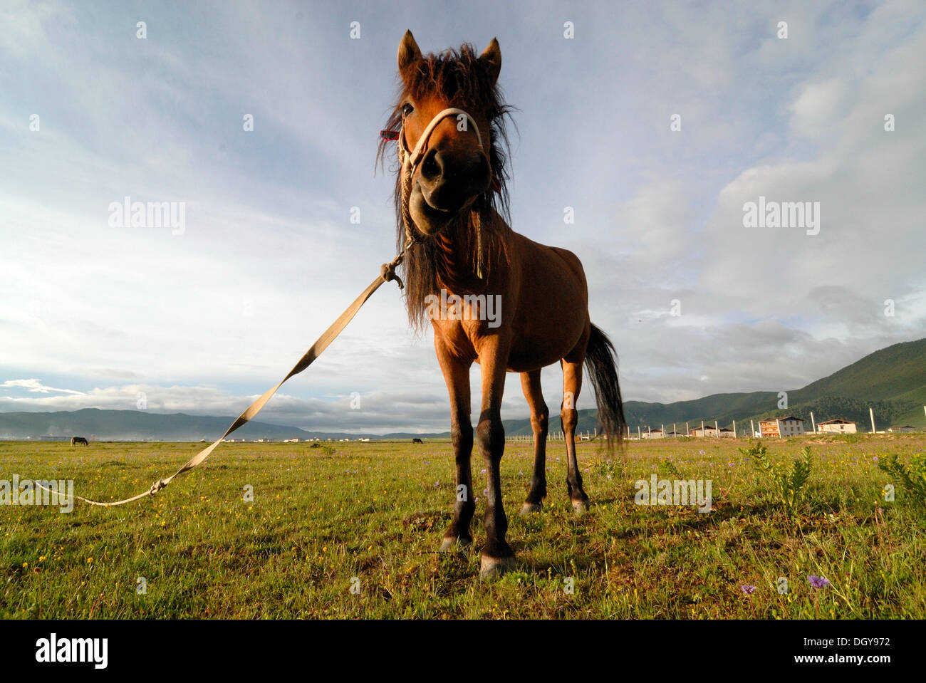 Horse on a lush summer pasture in the Himalayan foothills with Tibetan farmhouses of an Eastern Tibetan village at back, Kham - Stock Image