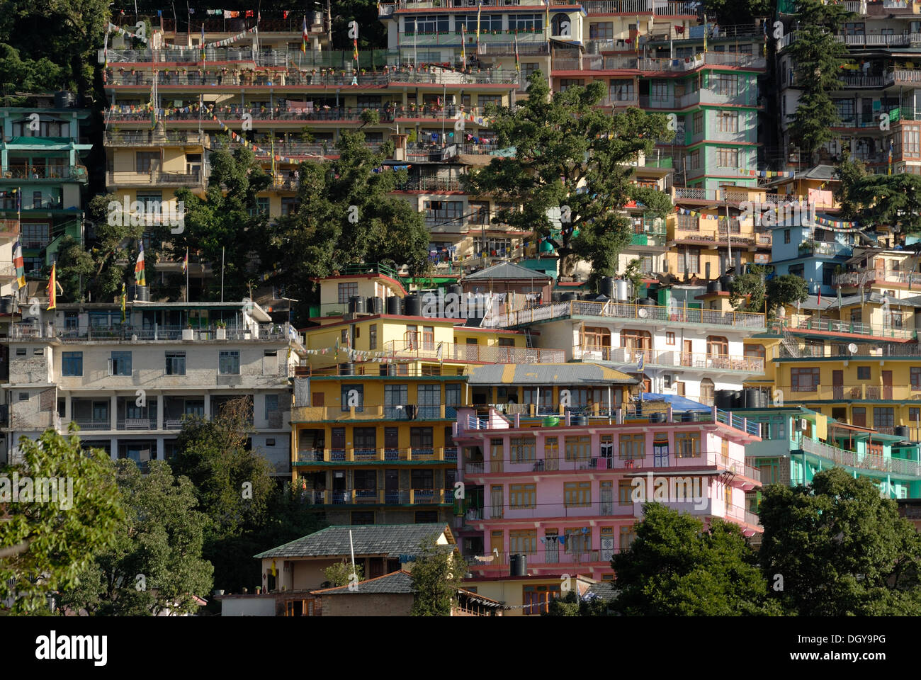 Residential buildings of exiled Tibetans with cedars, Upper Dharamsala, McLeod Ganj, Himachal Pradesh, Himalayas, India, Asia - Stock Image