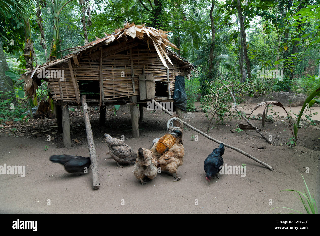 Cabin of forest dwellers, in Ponmudi, Western Ghats, Kerala, South India, India, Asia - Stock Image