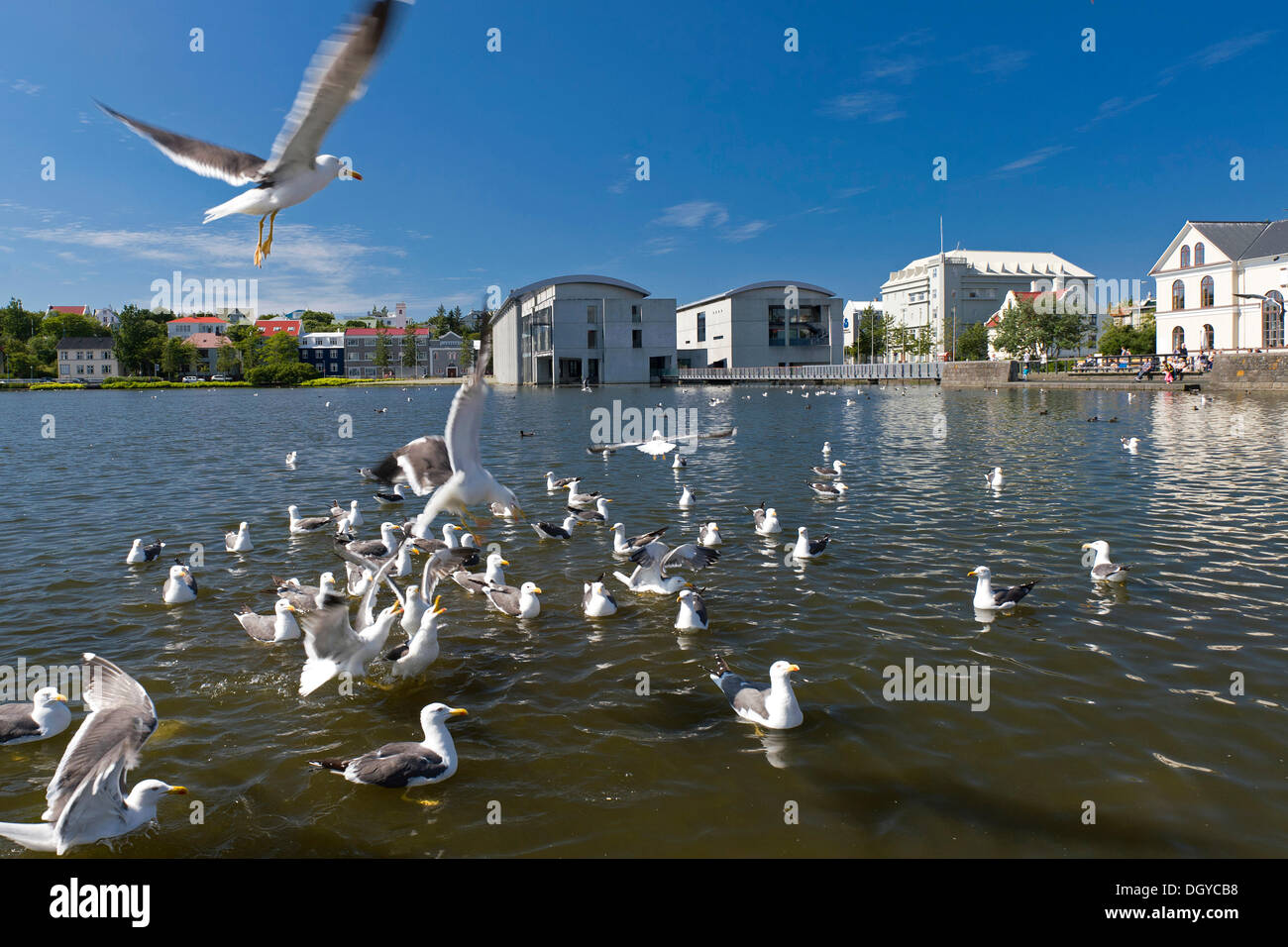 City hall and Tjoernin, city lake in the centre of Reykjavik, Iceland, Europe - Stock Image