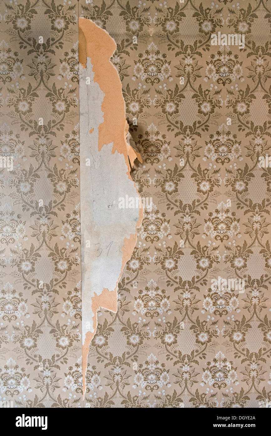 Old wallpaper from the sixties, partially torn-off, Stuttgart, Baden-Wuerttemberg