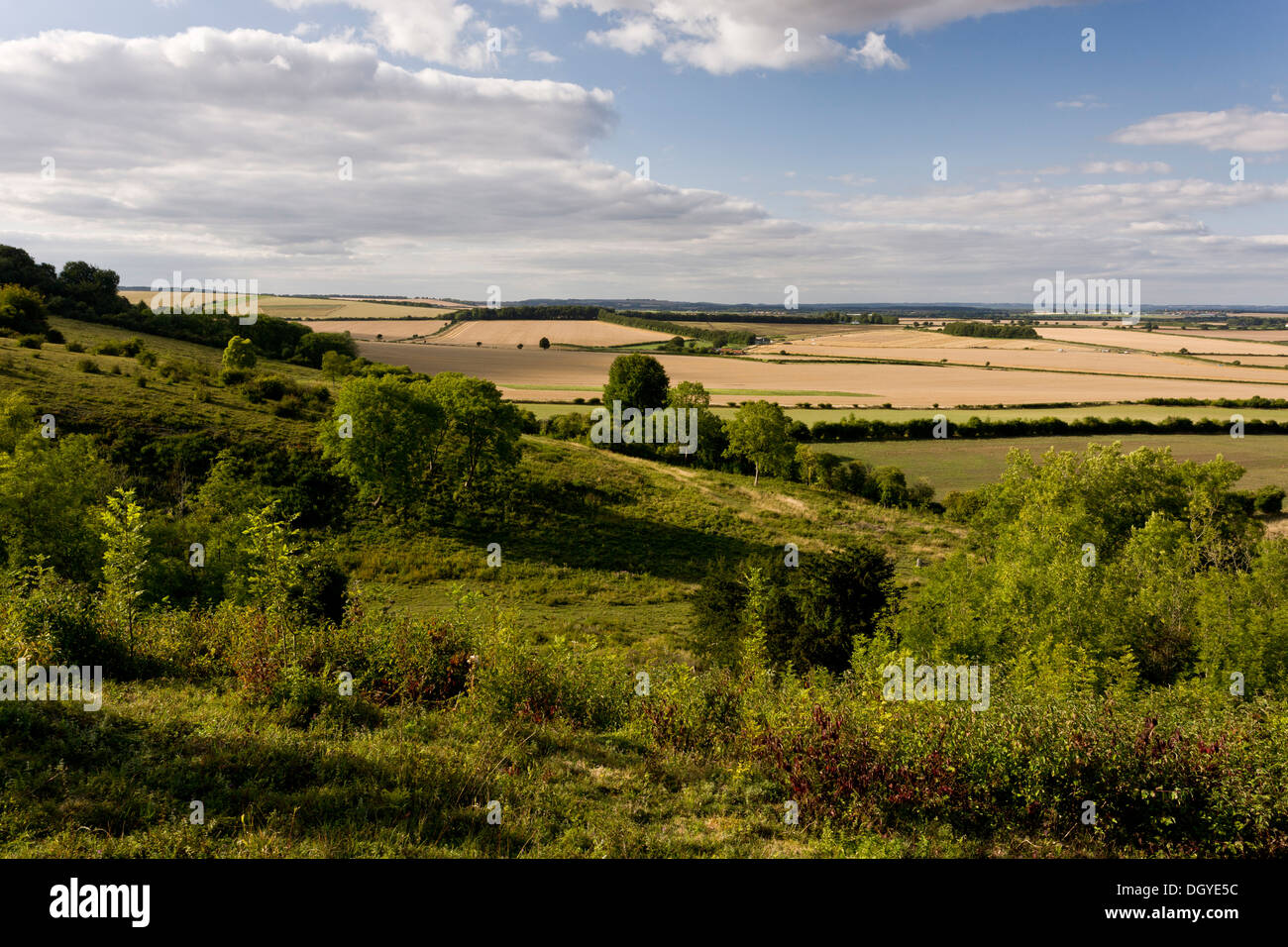 Broughton Down; north-facing chalk downland scarp, managed as nature reserve by Hampshire Wildlife Trust. - Stock Image
