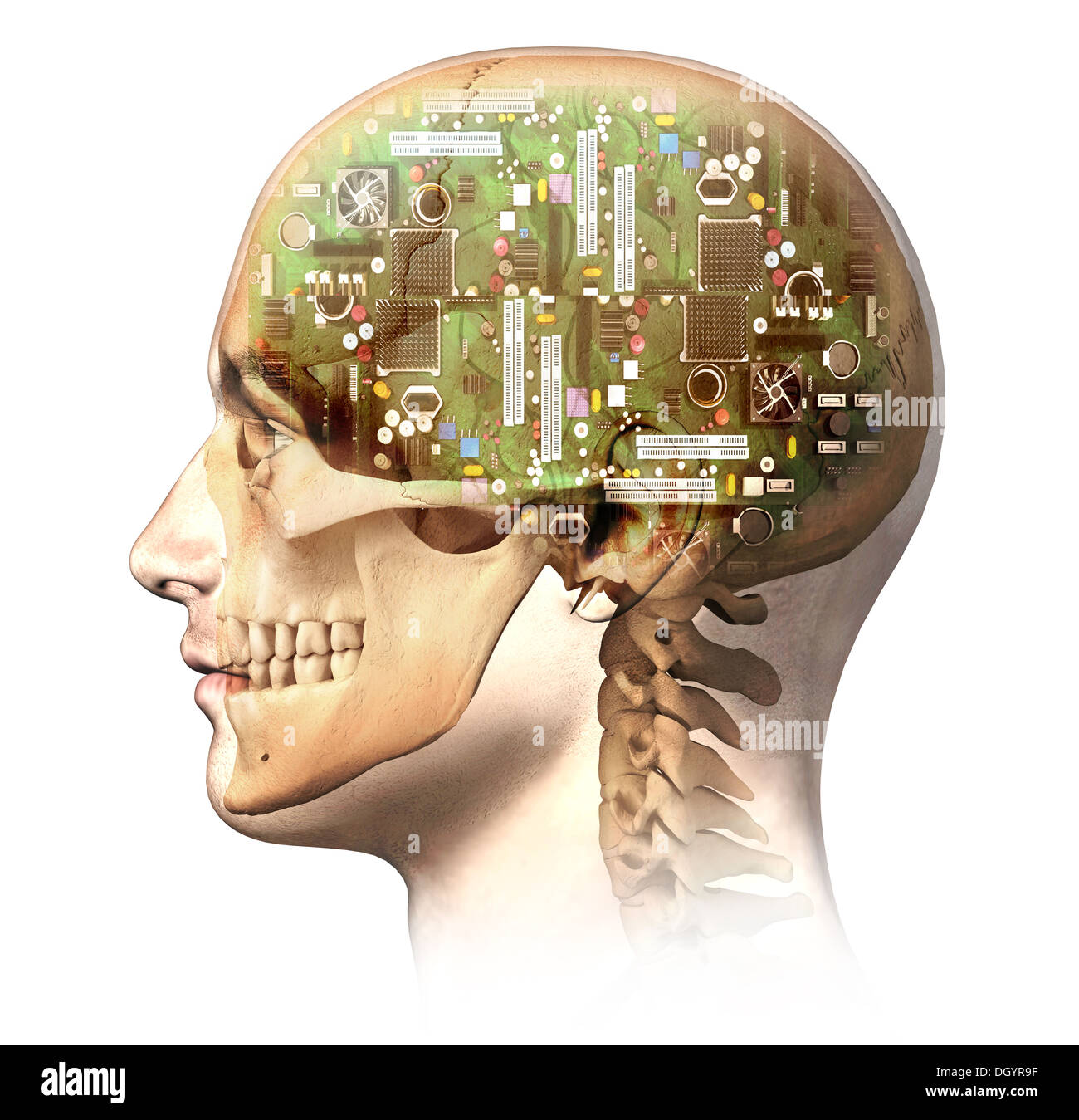 Male human head with skull and artificial electronic circuit brain ...