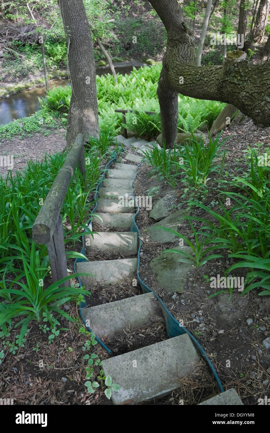 A set of steps designed with concrete paving slabs leads down to a patch of ferns in a landscaped backyard garden Stock Photo