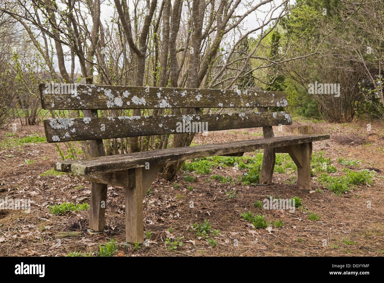 """An old wooden bench in the """"Jardin du Grand Portage"""" garden in spring, Saint-Didace, Lanaudiere, Quebec, Canada Stock Photo"""