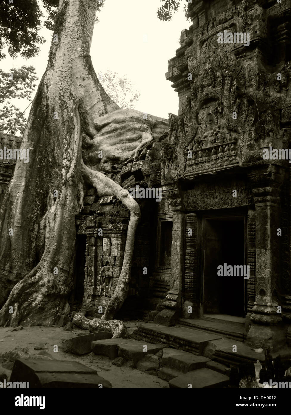 Taken at the overgrown Cambodian temples near Ankor Wat - Stock Image