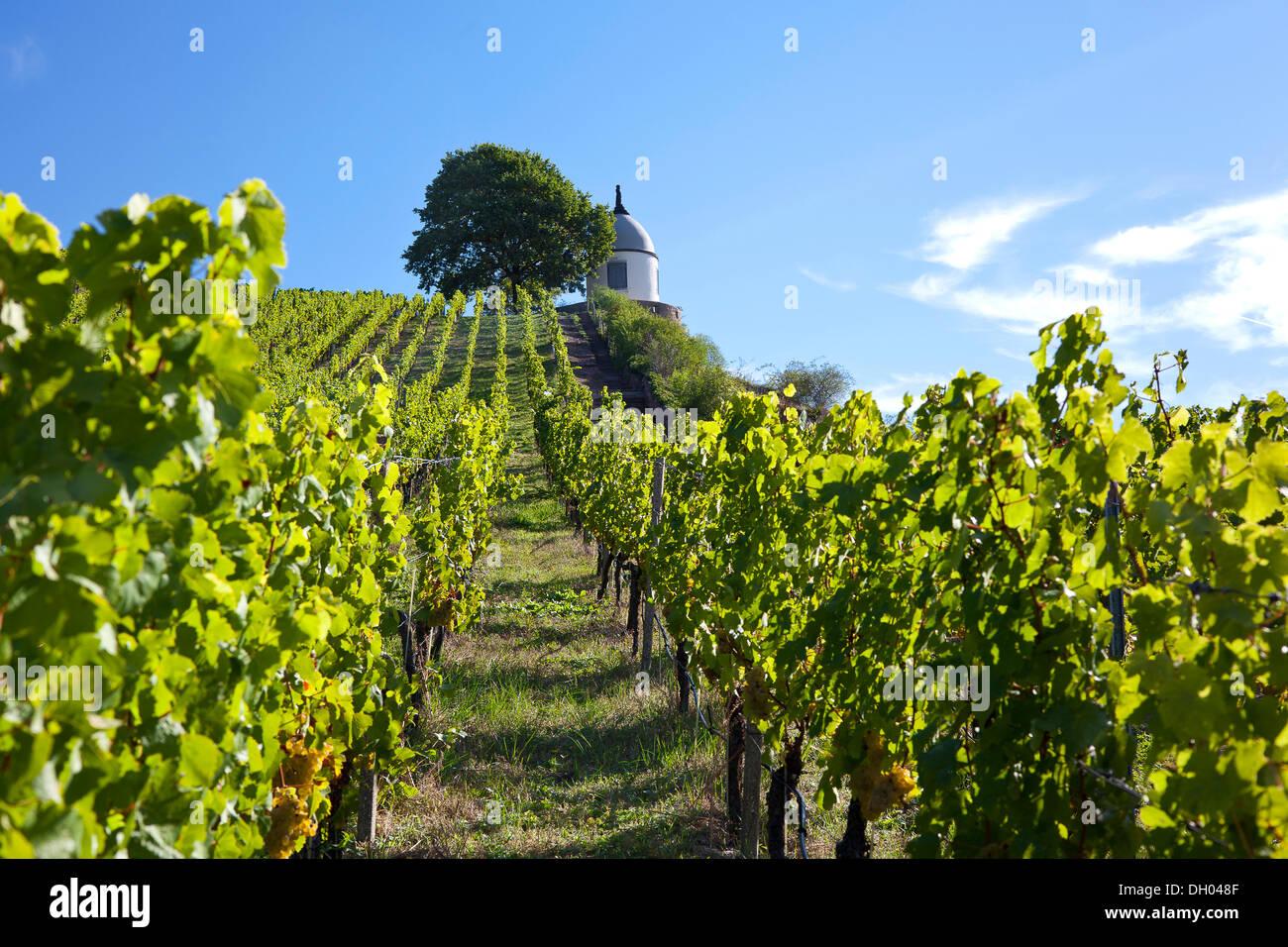 Vineyards of Schloss Wackerbarth looking on the Jacobstein pavillion, Radebeul, Saxon Elbe, Saxony Stock Photo