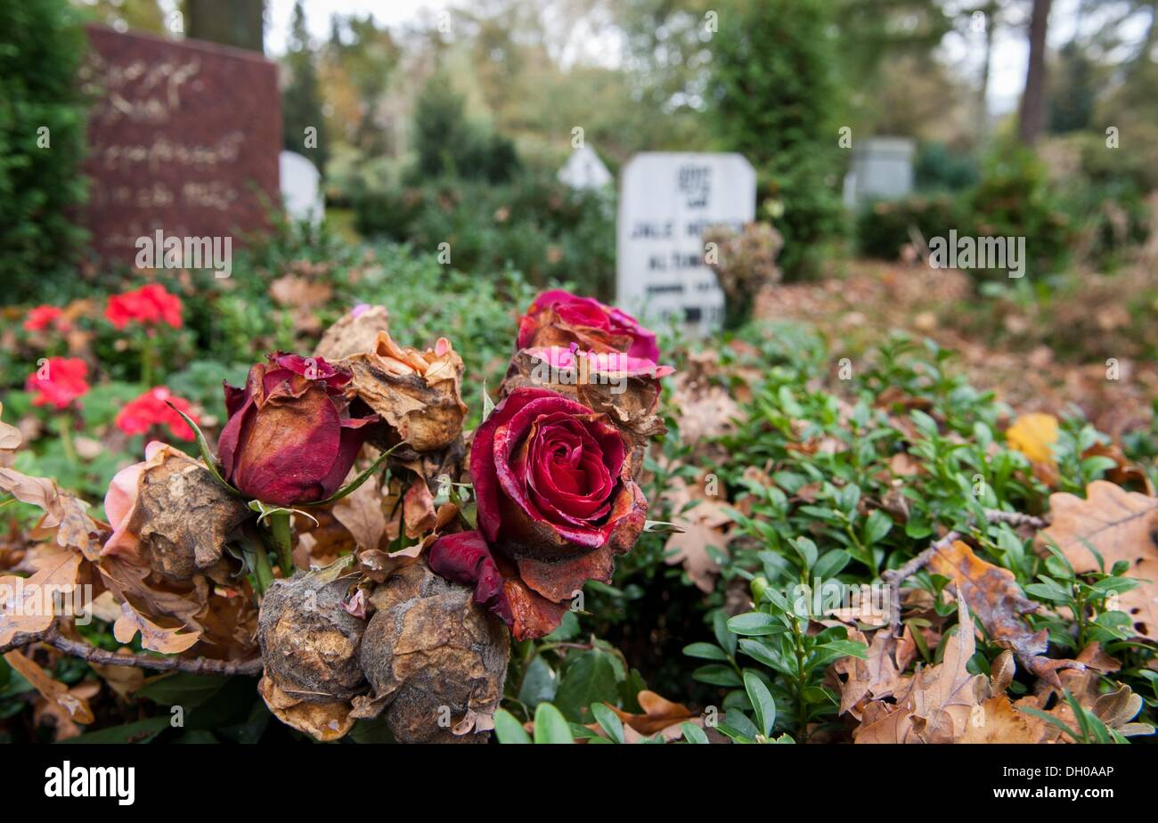 Muslim grave funeral stock photos muslim grave funeral stock hanover germany 28th oct 2013 withered roses and gravestones stand on the izmirmasajfo