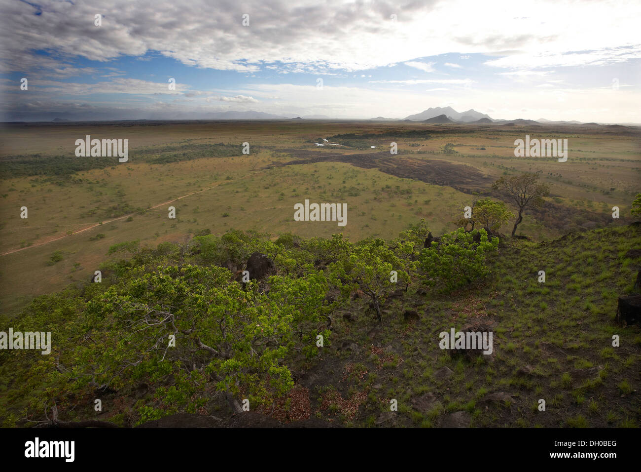 Savannah landscape, Guyana, South America. - Stock Image