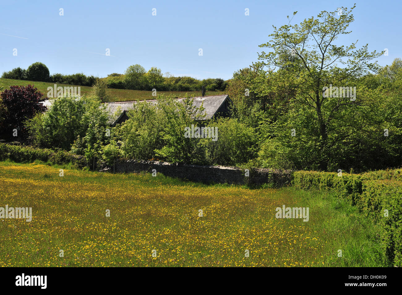The roof of the old Comins Coch village school near Aberystwyth, Wales, UK shows above the overgrown hedges that border it. - Stock Image