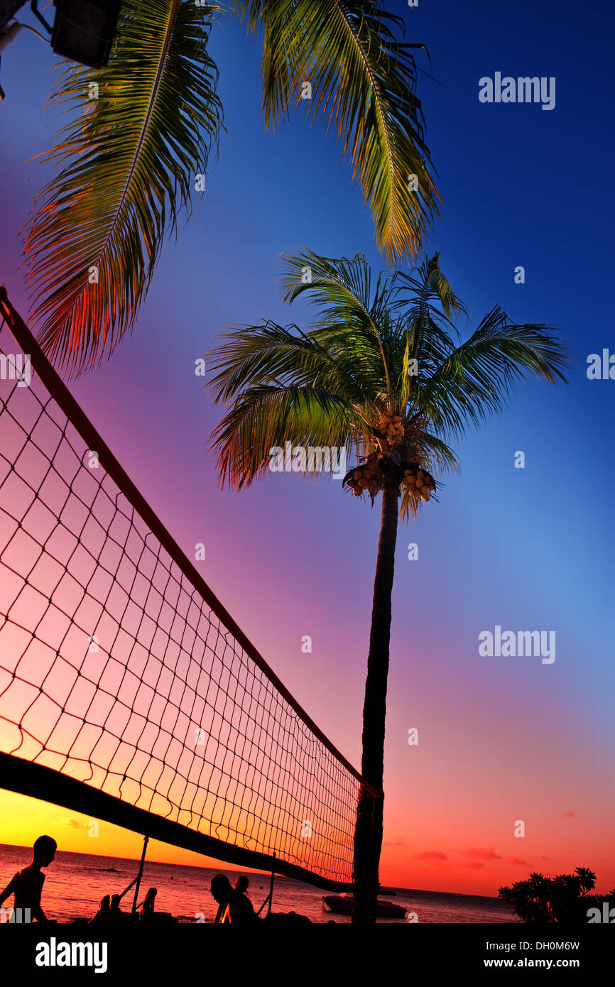 Grid for beach volleyball between palm trees - Stock Image