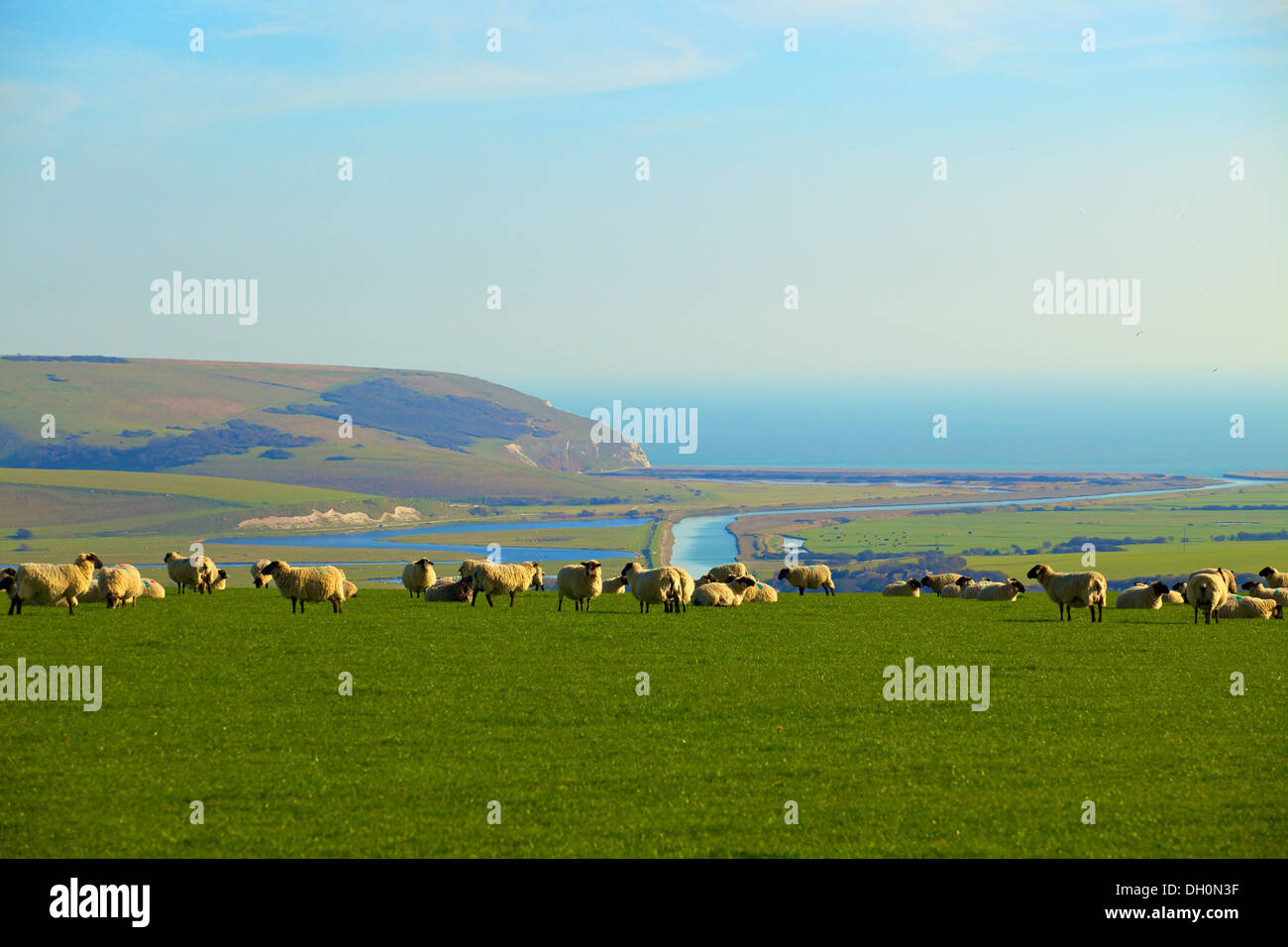 Sheep overlooking Cuckmere Haven, East Sussex, England, UK, Europe. Stock Photo