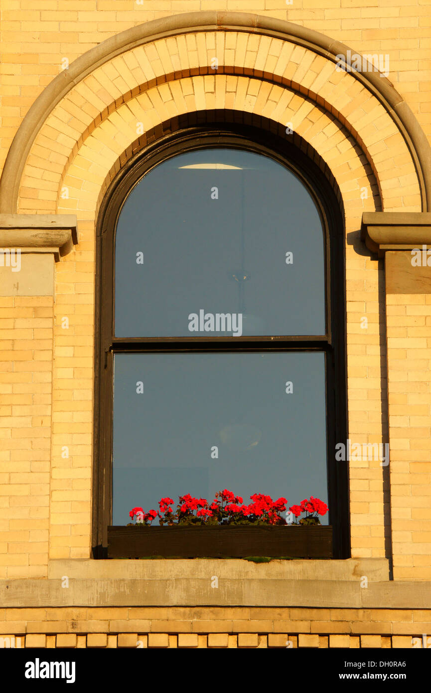 Geraniums on a windowsill of an old bank building in theFairhaven historic district, city of Bellingham, Washington - Stock Image