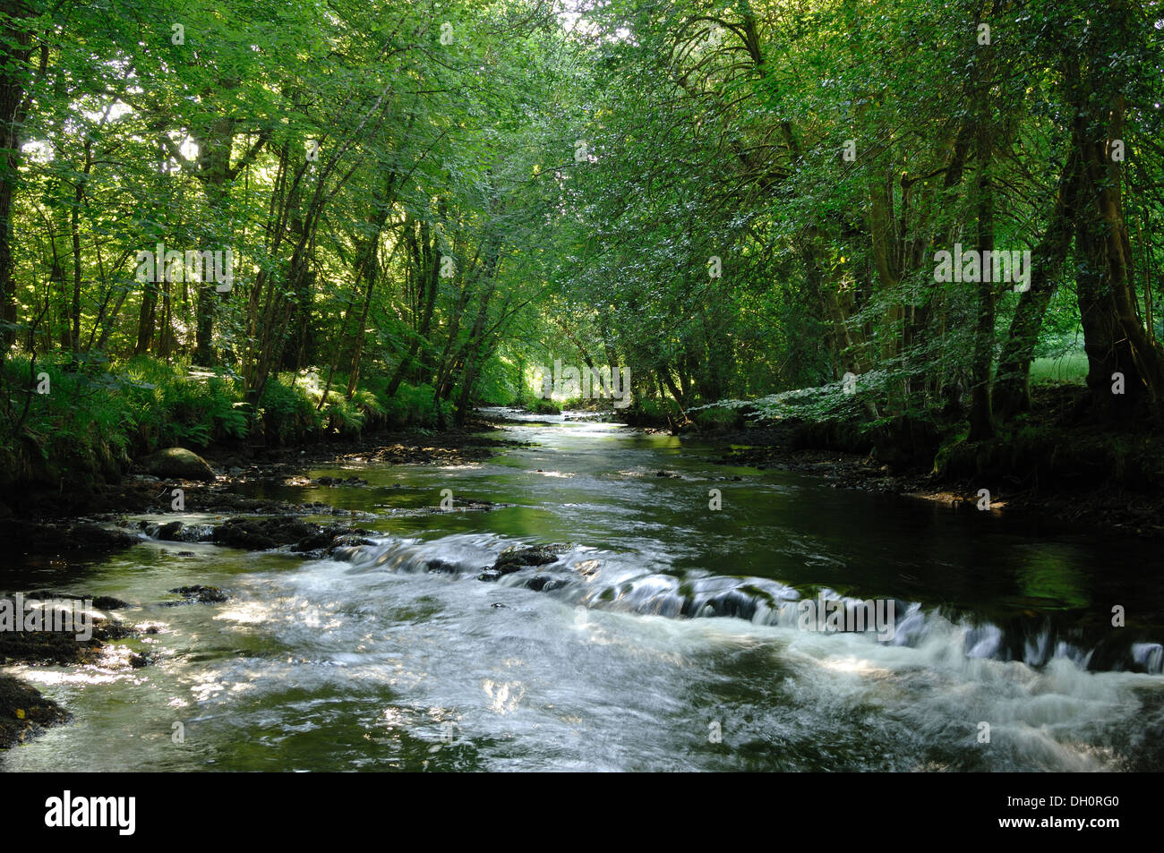 Fingle Wood and river teign near Mortonhampstead Dartmoor UK. Bought by the Woodland Trust in 2013 for restoration. Teign Valley - Stock Image