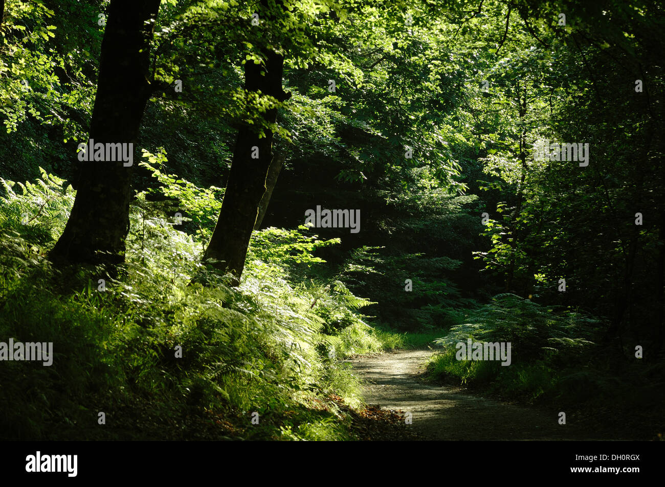 Fingle Wood near Mortonhampstead Dartmoor UK. Bought by the Woodland Trust in 2013 for restoration. Teign Valley - Stock Image
