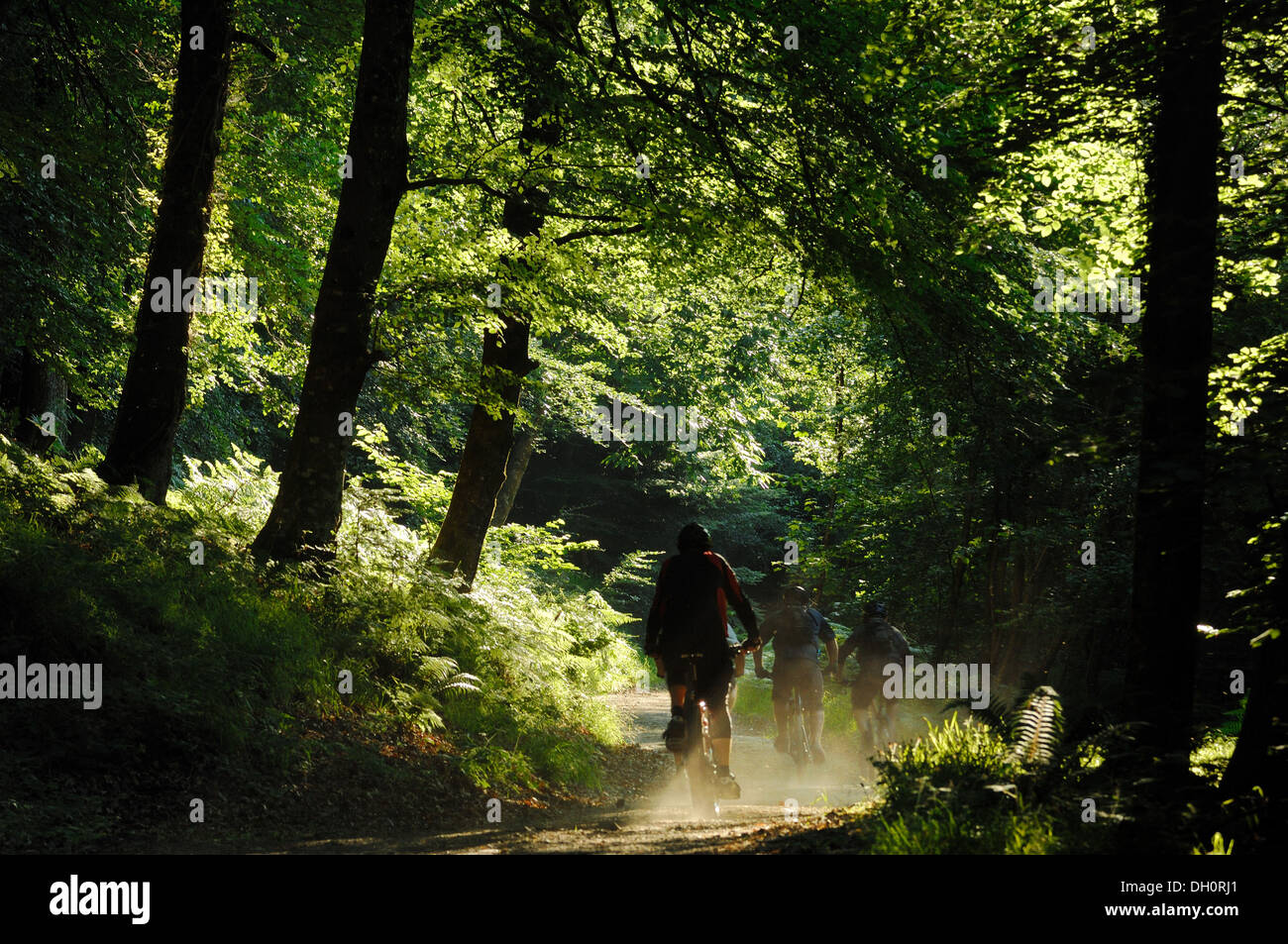 Cyclists in Fingle Wood near Mortonhampstead Dartmoor UK. Bought by the Woodland Trust in 2013 for restoration. Teign Valley - Stock Image