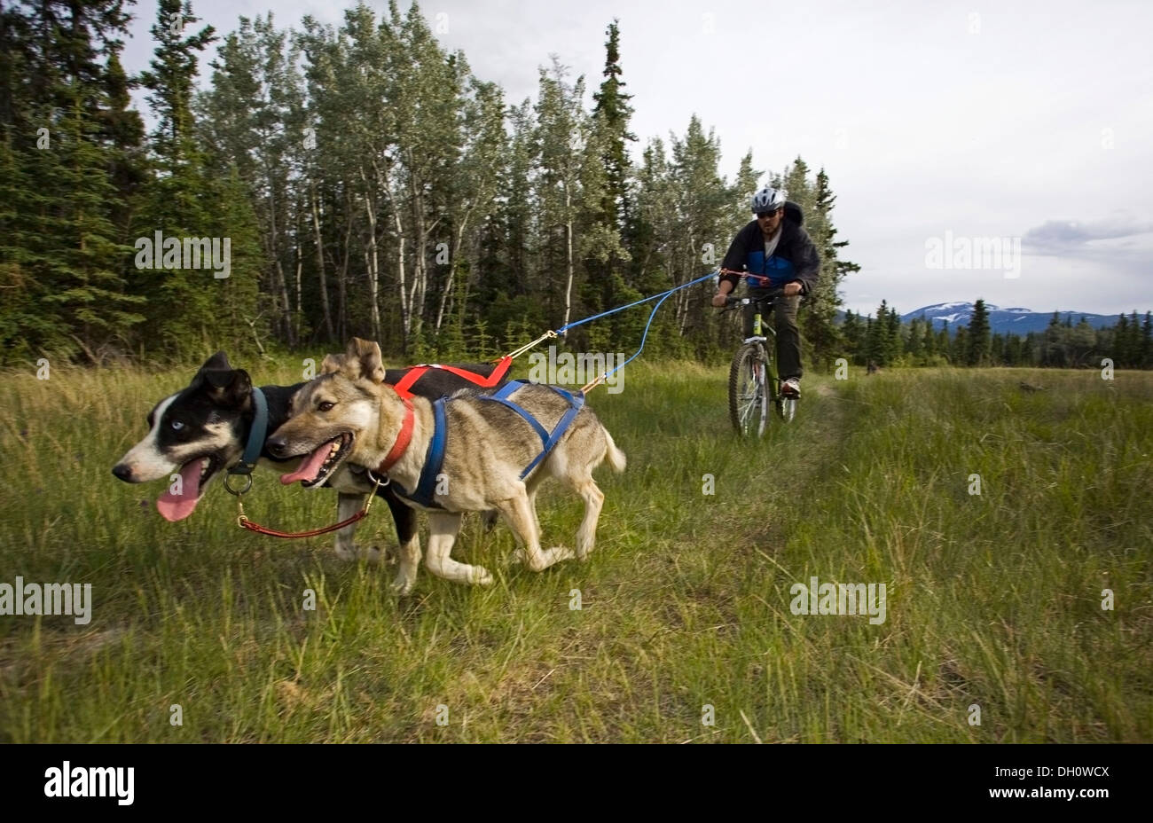 Dog Scootering Videos