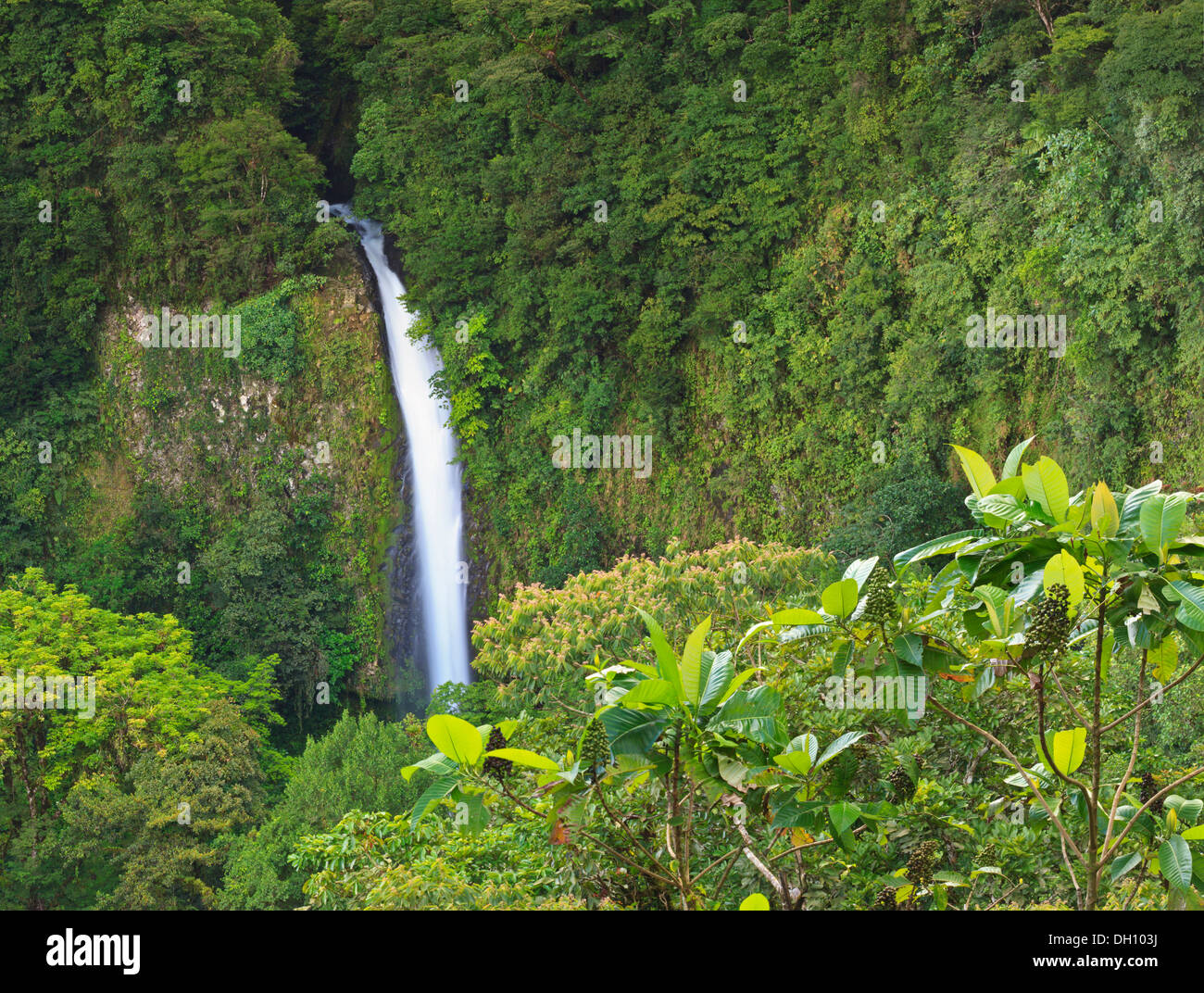 Distant view of La Fortuna Waterfall amongst the rainforest near Arenal Volcano in Costa Rica - Stock Image