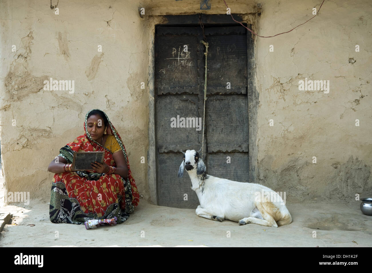 Goat tied to door and woman studying uttar pradesh India Asia - Stock Image