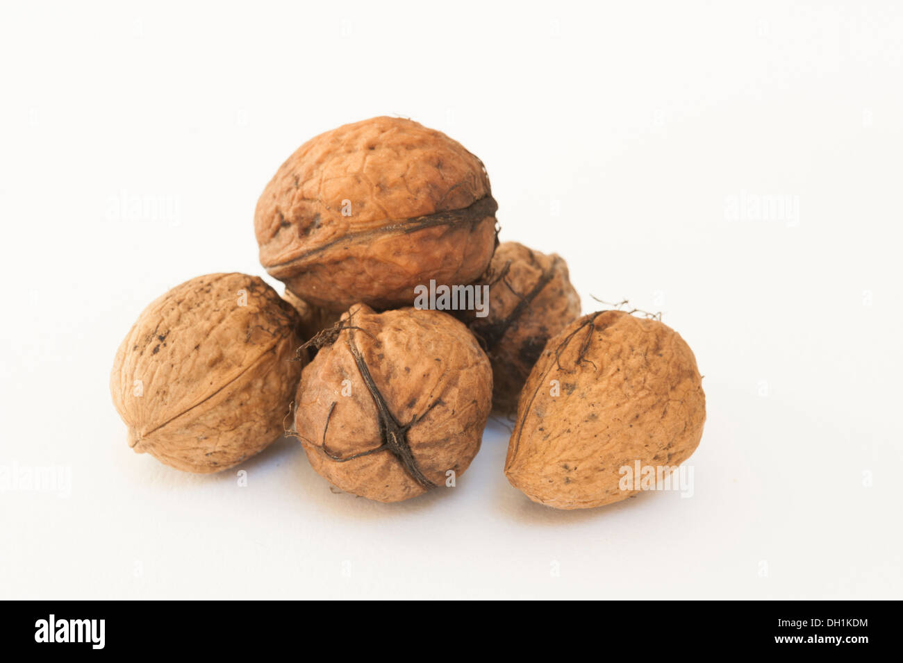 Wet walnuts on a white background - Stock Image