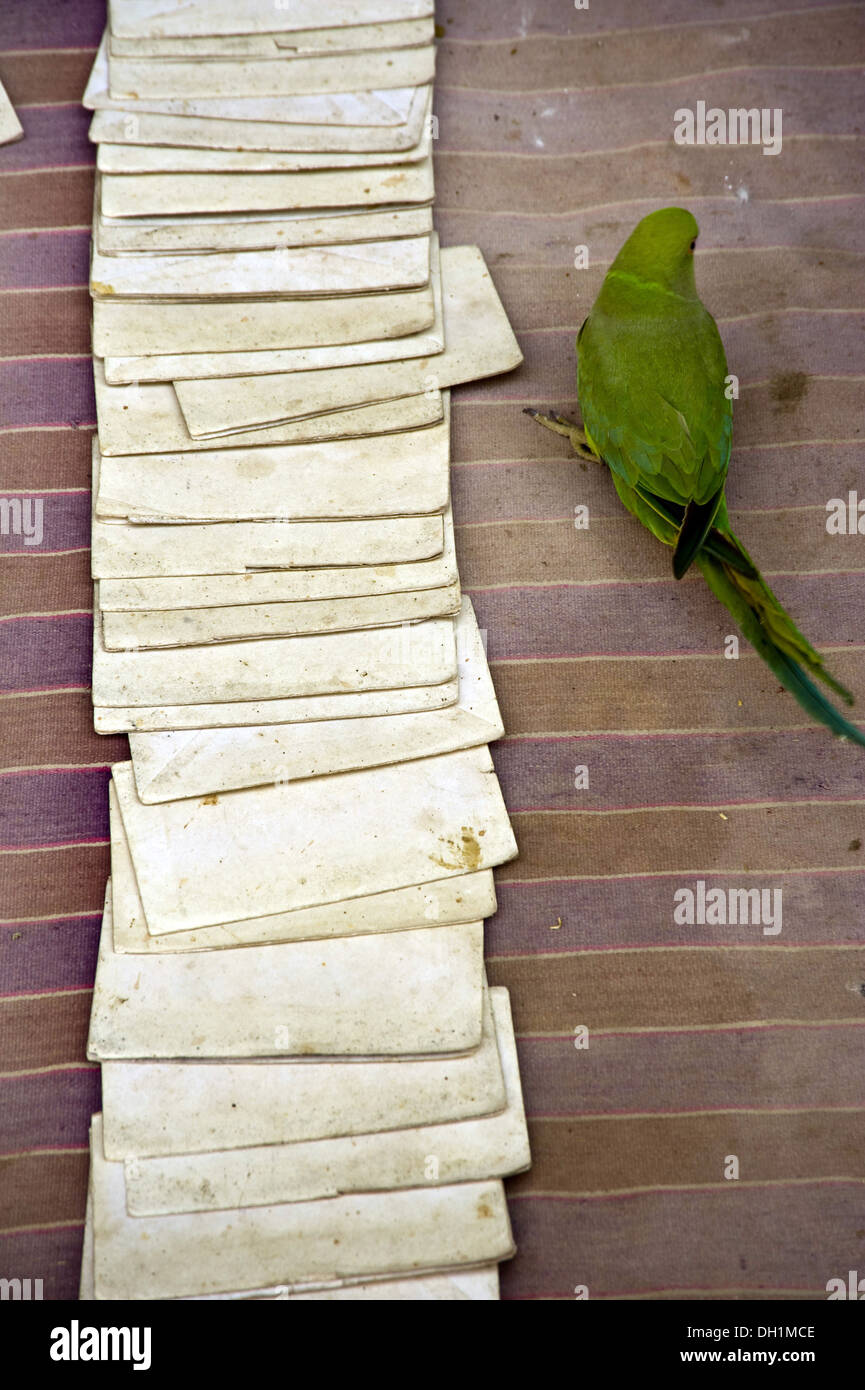 parrot astrology cards India - Stock Image